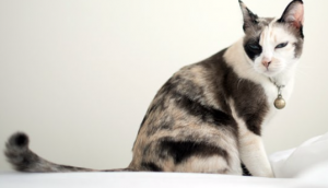 How to Stop Your Cat From Peeing On Your Bed — Or Anywhere Other Than The Litter Box