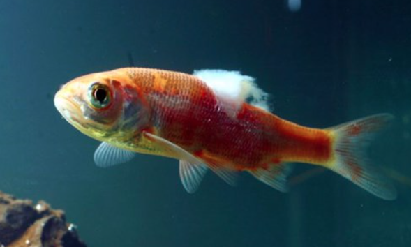 Frequently asked questions on treating sick fish