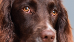 The science of man's best friend