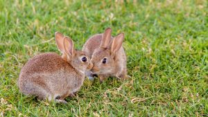 Does my rabbit need vaccinations ?
